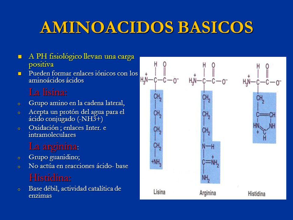AMINOACIDOS BASICOS Histidina: