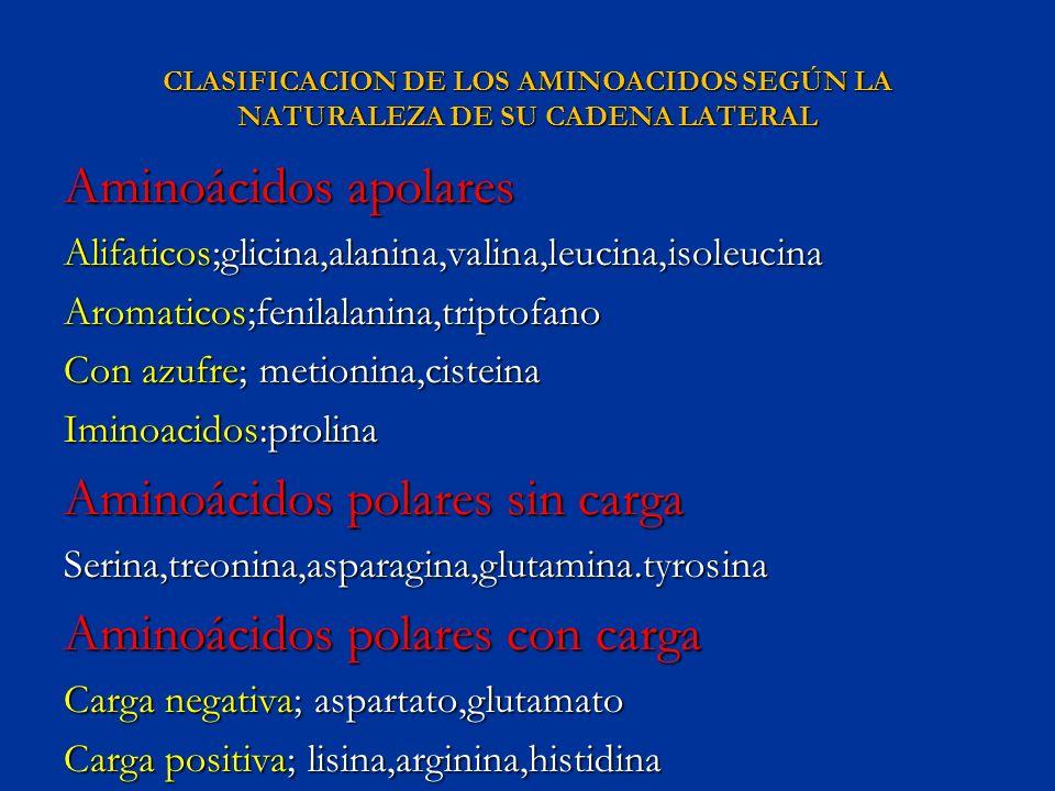 Aminoácidos polares sin carga Aminoácidos polares con carga