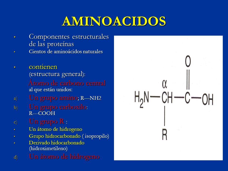 AMINOACIDOS Componentes estructurales de las proteínas