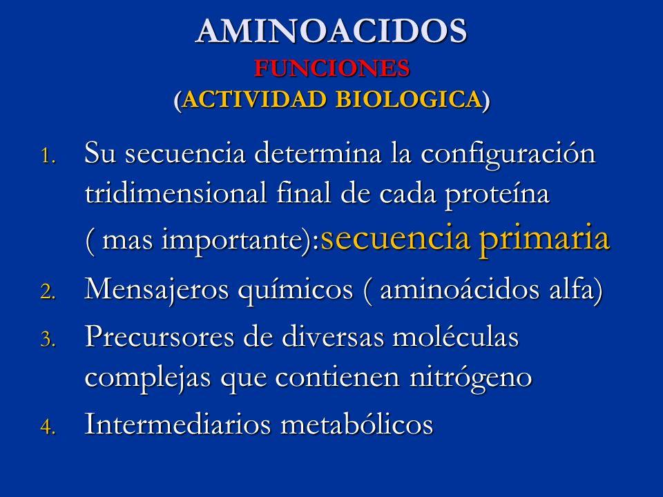 AMINOACIDOS FUNCIONES (ACTIVIDAD BIOLOGICA)