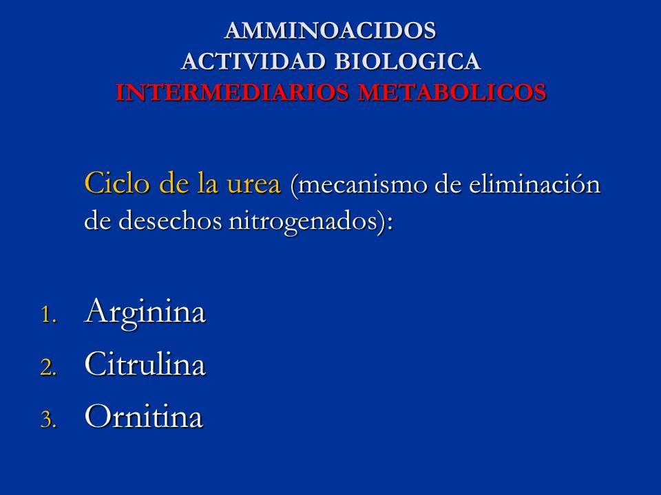 AMMINOACIDOS ACTIVIDAD BIOLOGICA INTERMEDIARIOS METABOLICOS
