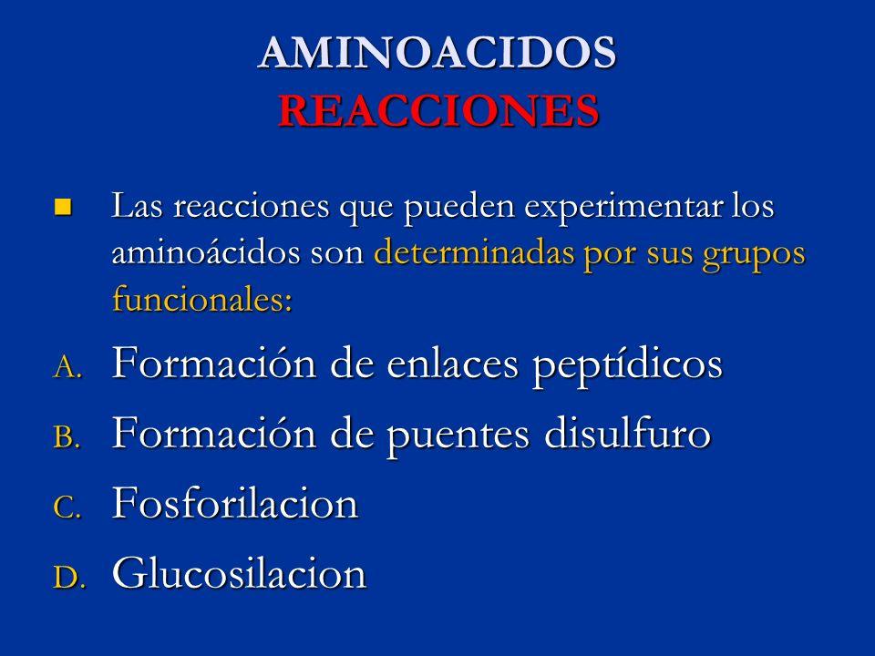 AMINOACIDOS REACCIONES