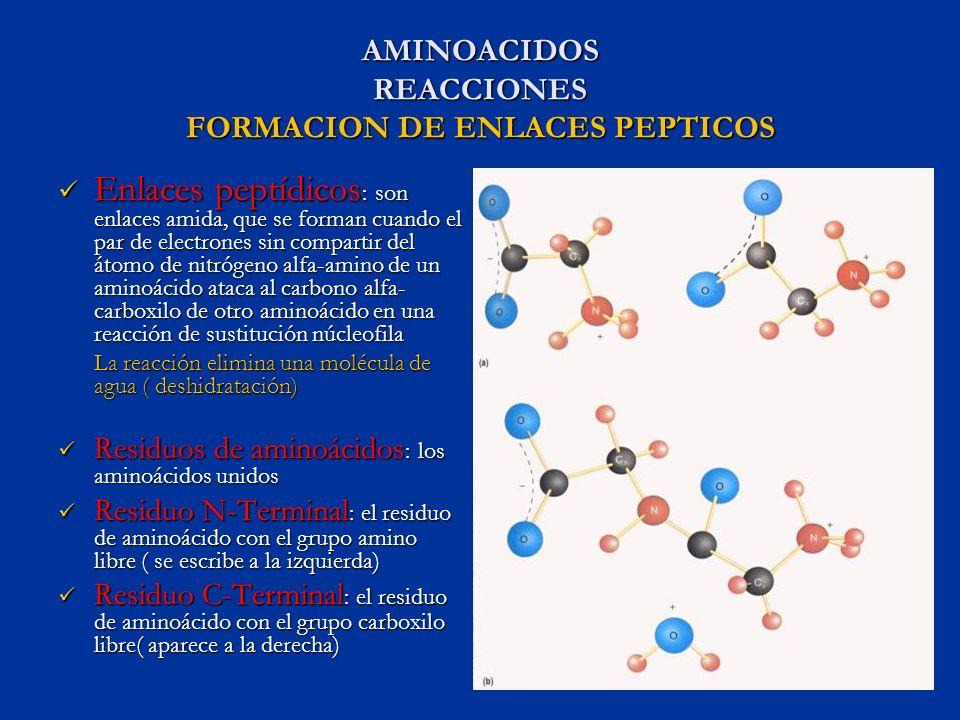 AMINOACIDOS REACCIONES FORMACION DE ENLACES PEPTICOS