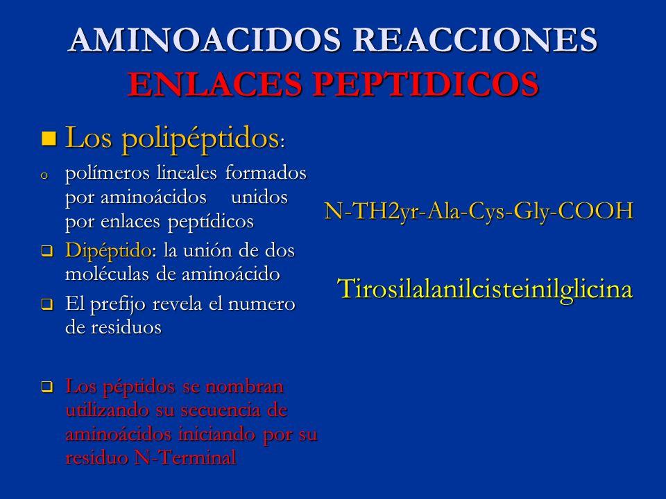 AMINOACIDOS REACCIONES ENLACES PEPTIDICOS