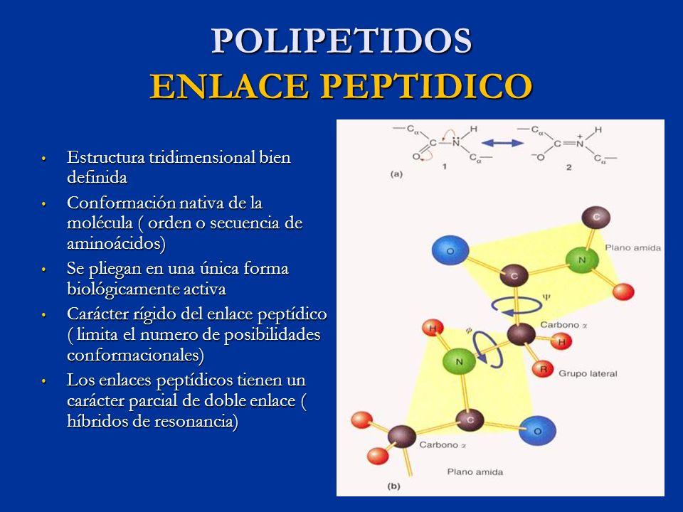 POLIPETIDOS ENLACE PEPTIDICO