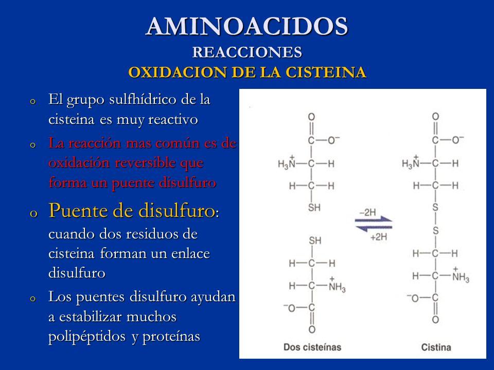 AMINOACIDOS REACCIONES OXIDACION DE LA CISTEINA