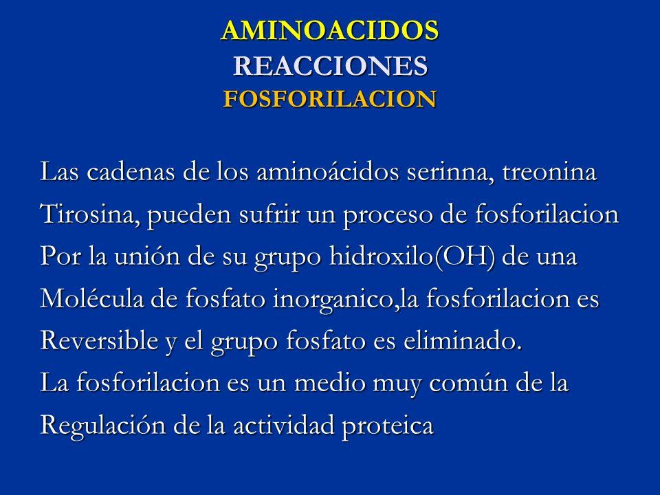 AMINOACIDOS REACCIONES FOSFORILACION