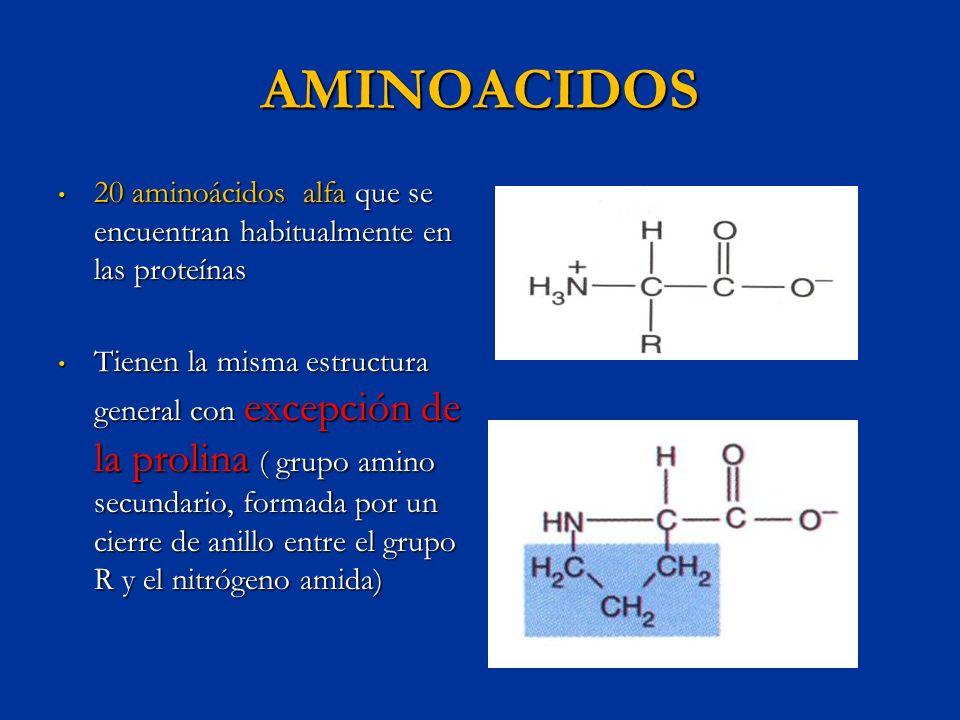 AMINOACIDOS20 aminoácidos alfa que se encuentran habitualmente en las proteínas.