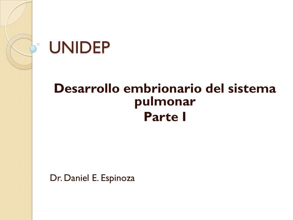 Desarrollo embrionario del sistema pulmonar