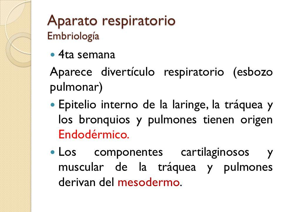 Aparato respiratorio Embriología