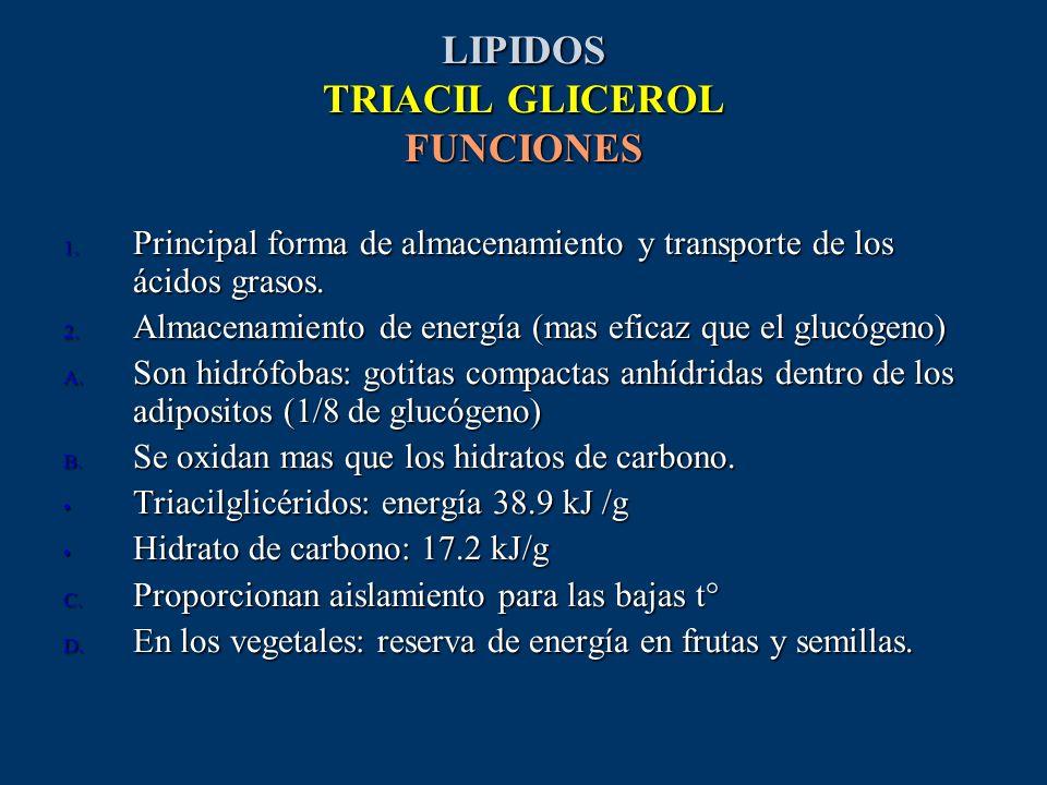 LIPIDOS TRIACIL GLICEROL FUNCIONES