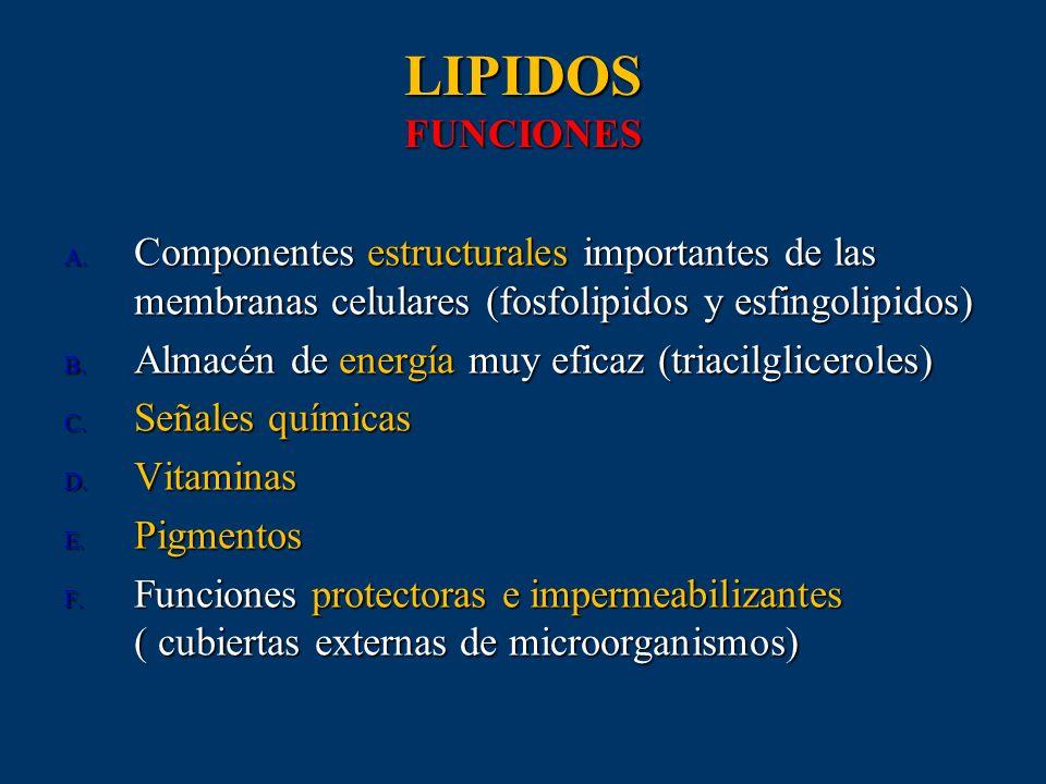 LIPIDOS FUNCIONESComponentes estructurales importantes de las membranas celulares (fosfolipidos y esfingolipidos)