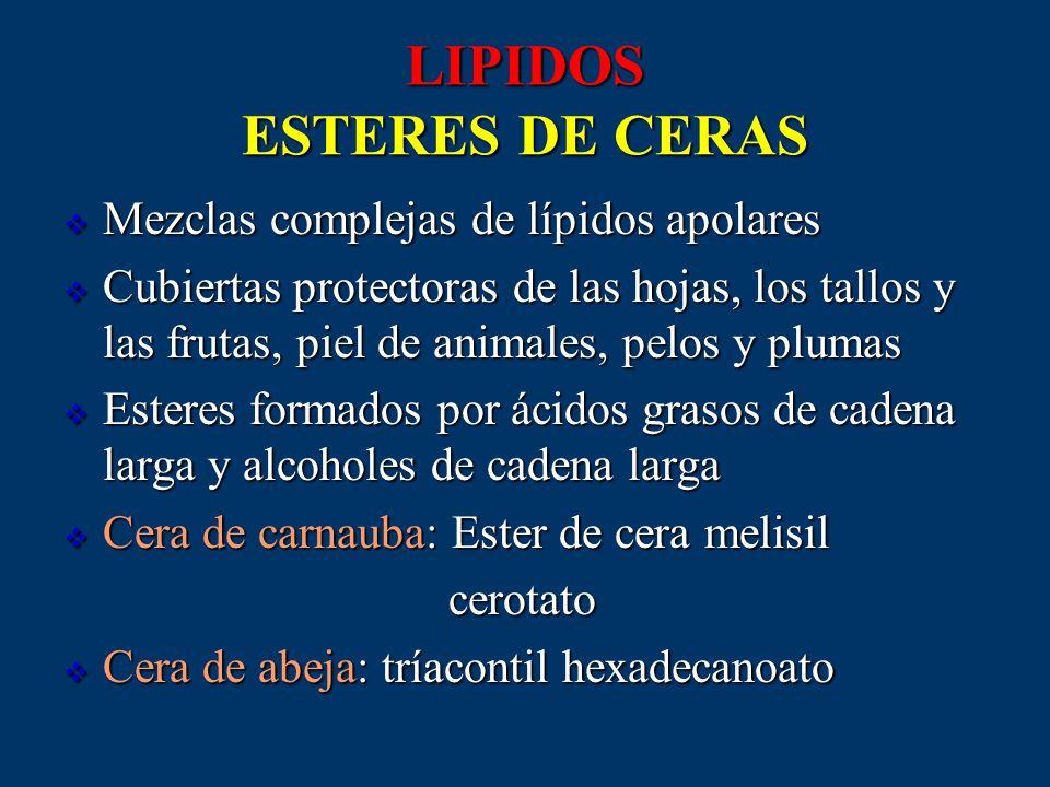 LIPIDOS ESTERES DE CERAS