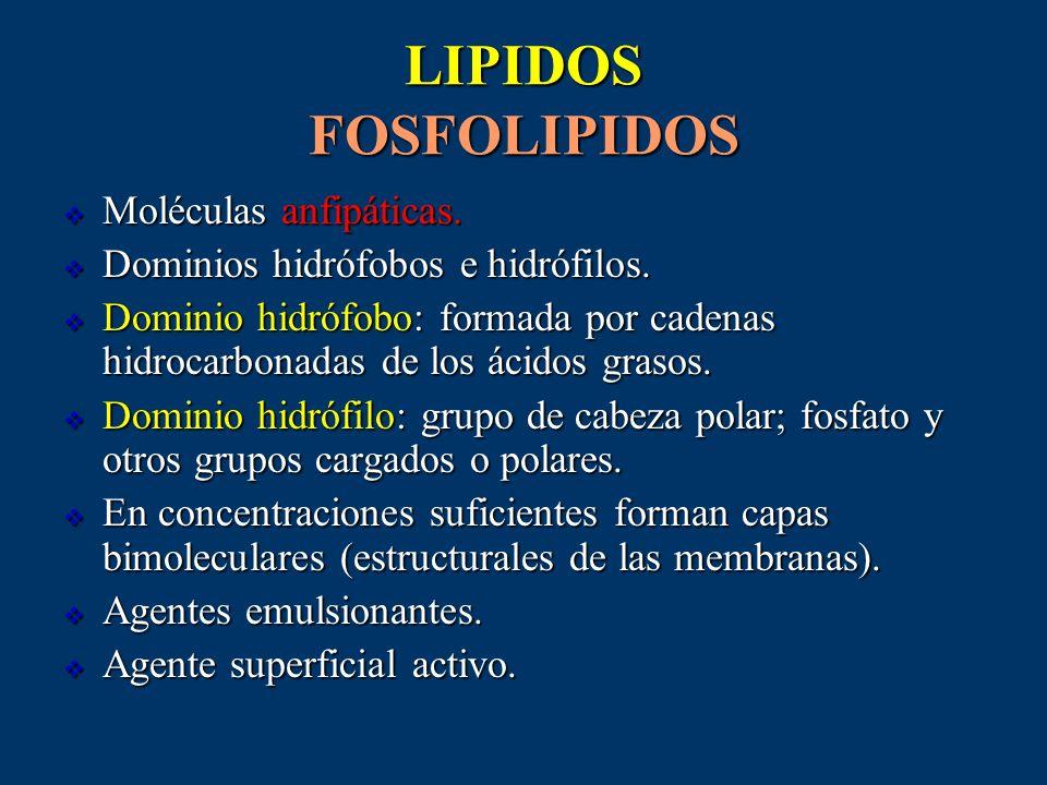LIPIDOS FOSFOLIPIDOS Moléculas anfipáticas.