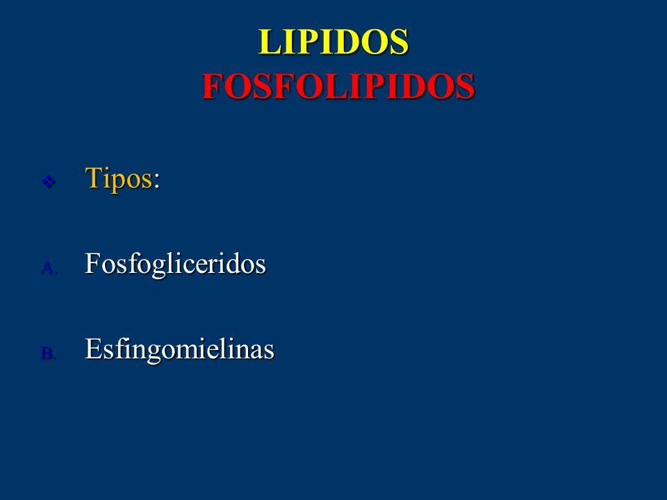 LIPIDOS FOSFOLIPIDOS Tipos: Fosfogliceridos Esfingomielinas