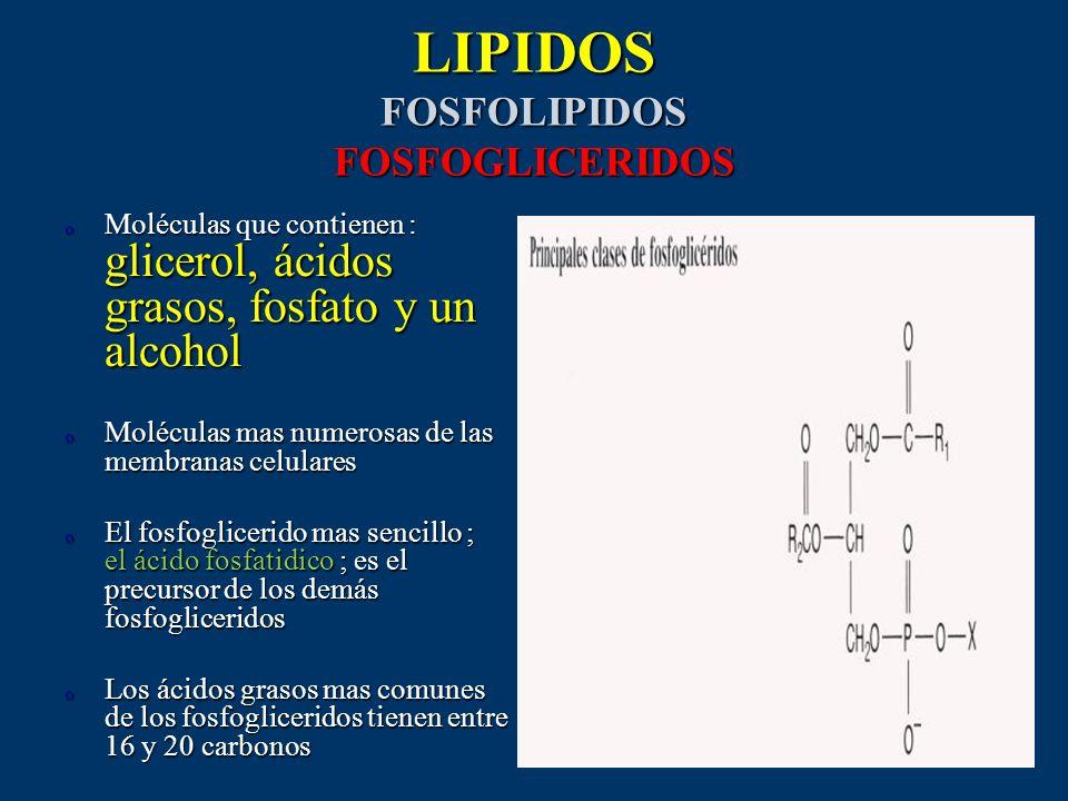 LIPIDOS FOSFOLIPIDOS FOSFOGLICERIDOS
