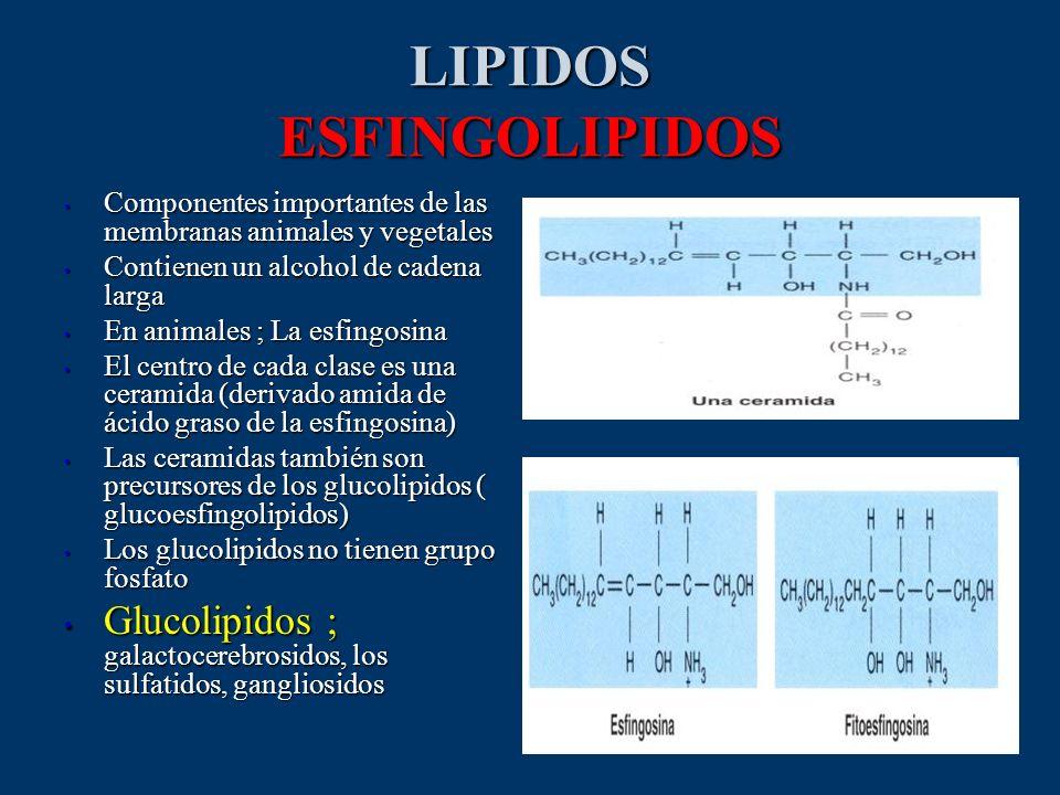 LIPIDOS ESFINGOLIPIDOS