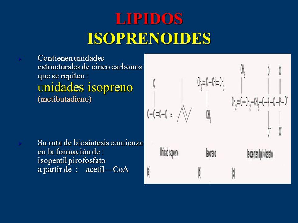 LIPIDOS ISOPRENOIDES Contienen unidades estructurales de cinco carbonos que se repiten : Unidades isopreno (metibutadieno)