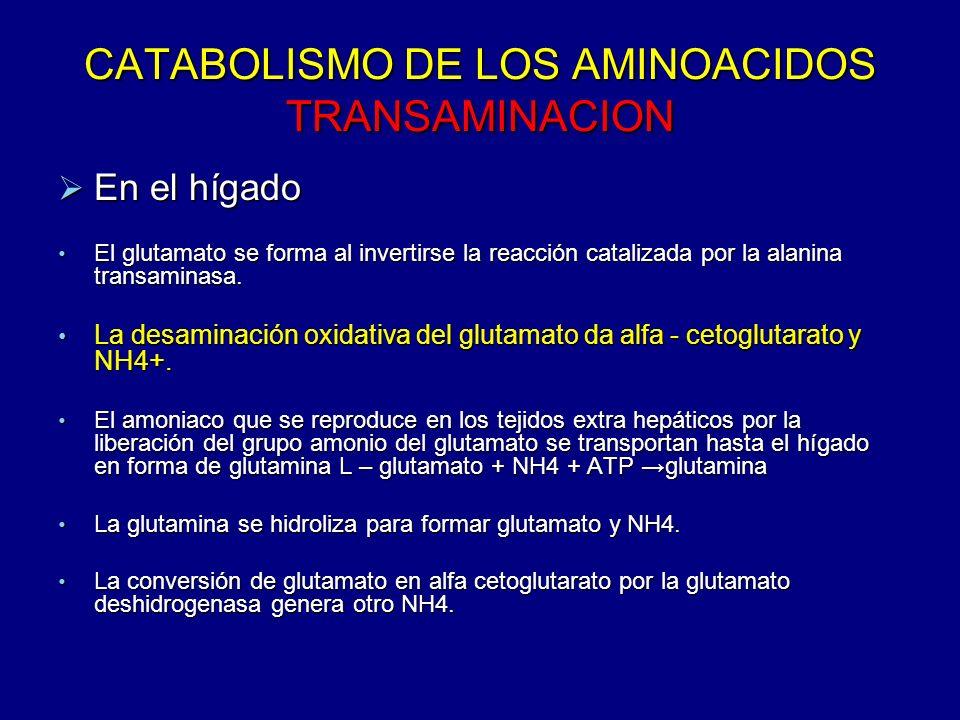 CATABOLISMO DE LOS AMINOACIDOS TRANSAMINACION
