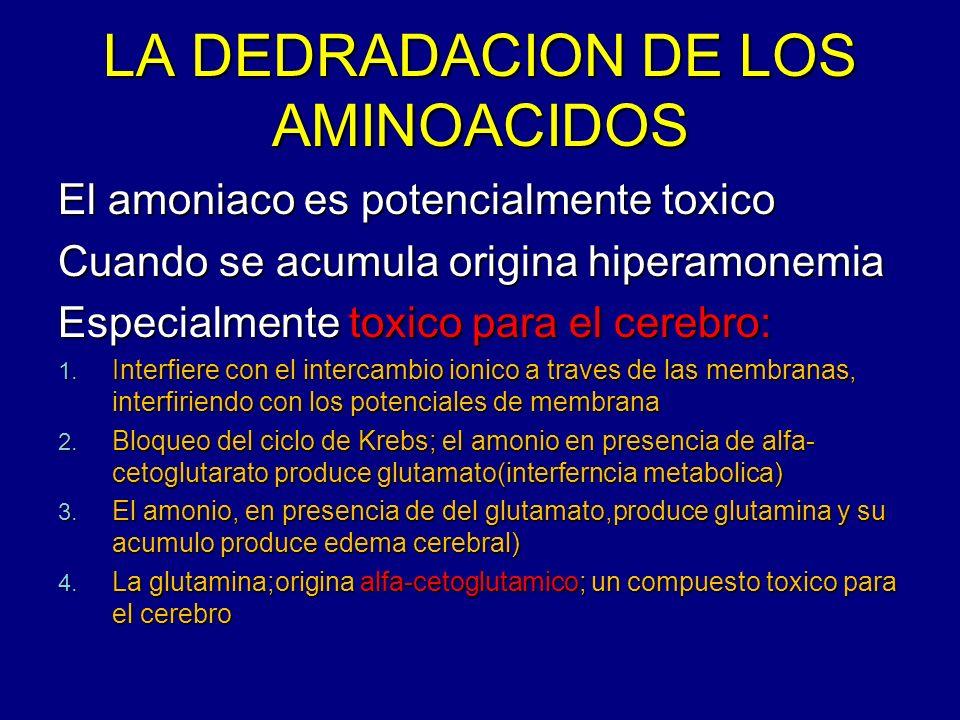 LA DEDRADACION DE LOS AMINOACIDOS