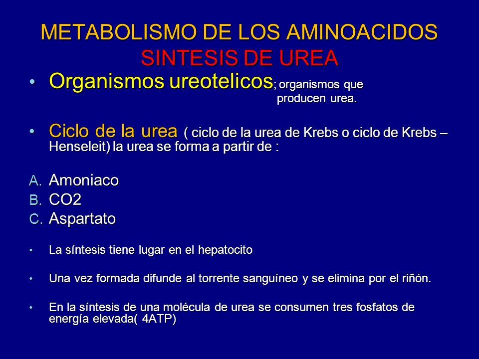 METABOLISMO DE LOS AMINOACIDOS SINTESIS DE UREA