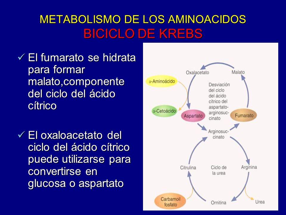 METABOLISMO DE LOS AMINOACIDOS BICICLO DE KREBS