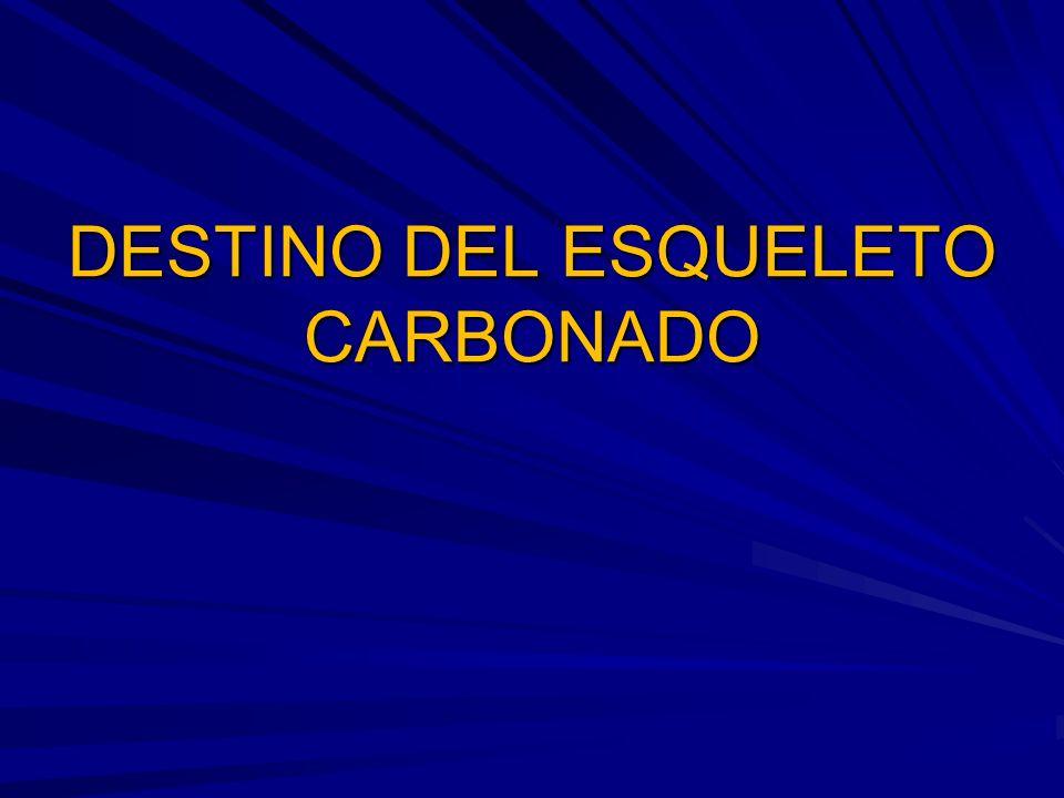 DESTINO DEL ESQUELETO CARBONADO
