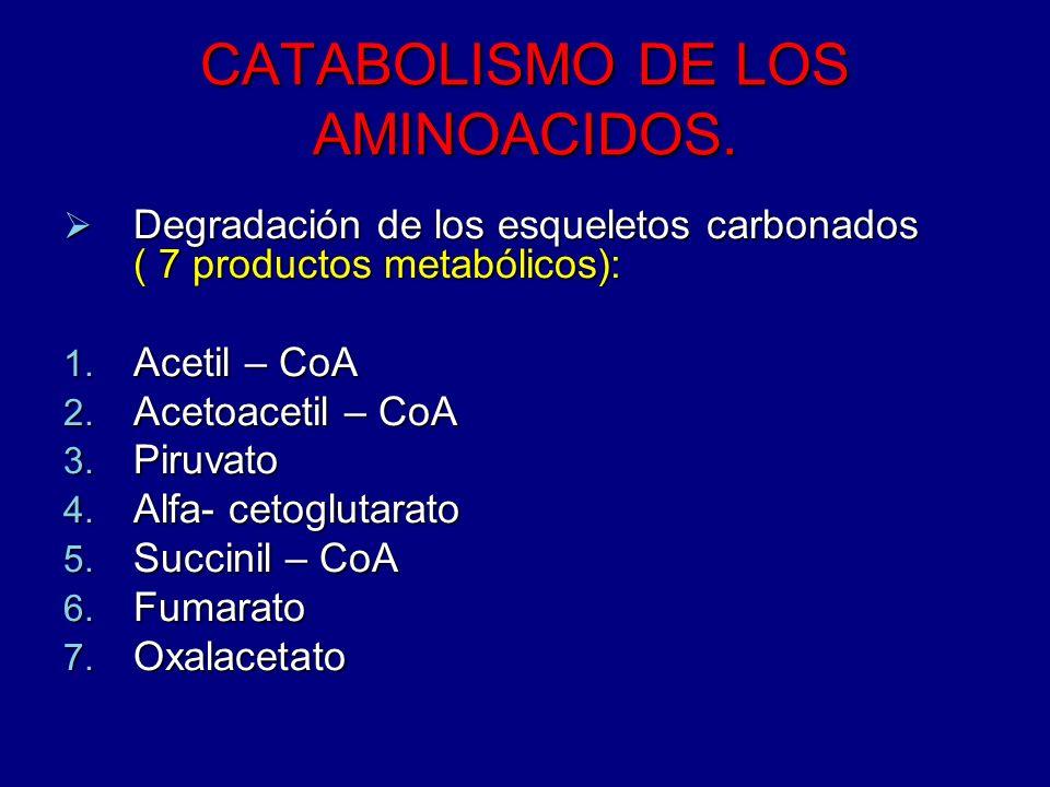 CATABOLISMO DE LOS AMINOACIDOS.