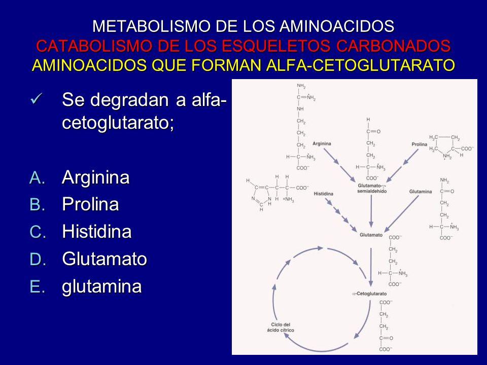 Se degradan a alfa-cetoglutarato;