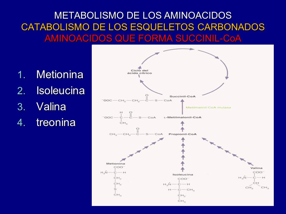 Metionina Isoleucina Valina treonina