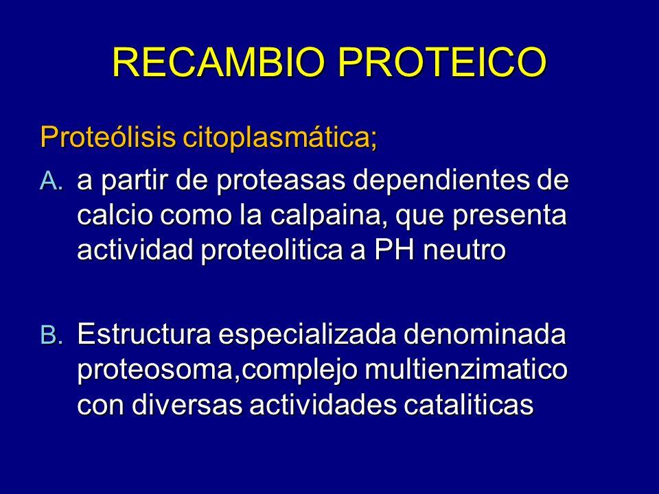 RECAMBIO PROTEICO Proteólisis citoplasmática;