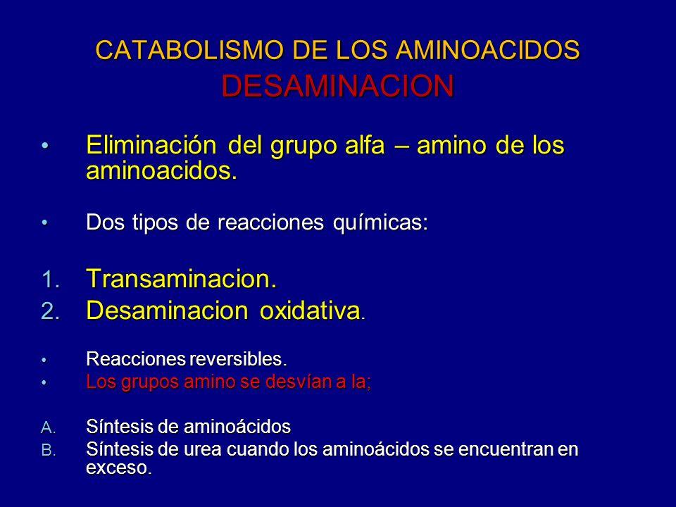CATABOLISMO DE LOS AMINOACIDOS DESAMINACION