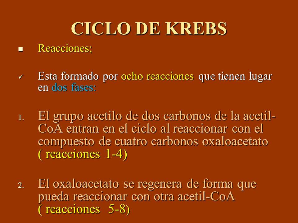 CICLO DE KREBS Reacciones; Esta formado por ocho reacciones que tienen lugar en dos fases: