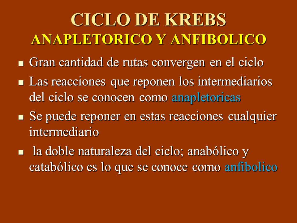 CICLO DE KREBS ANAPLETORICO Y ANFIBOLICO