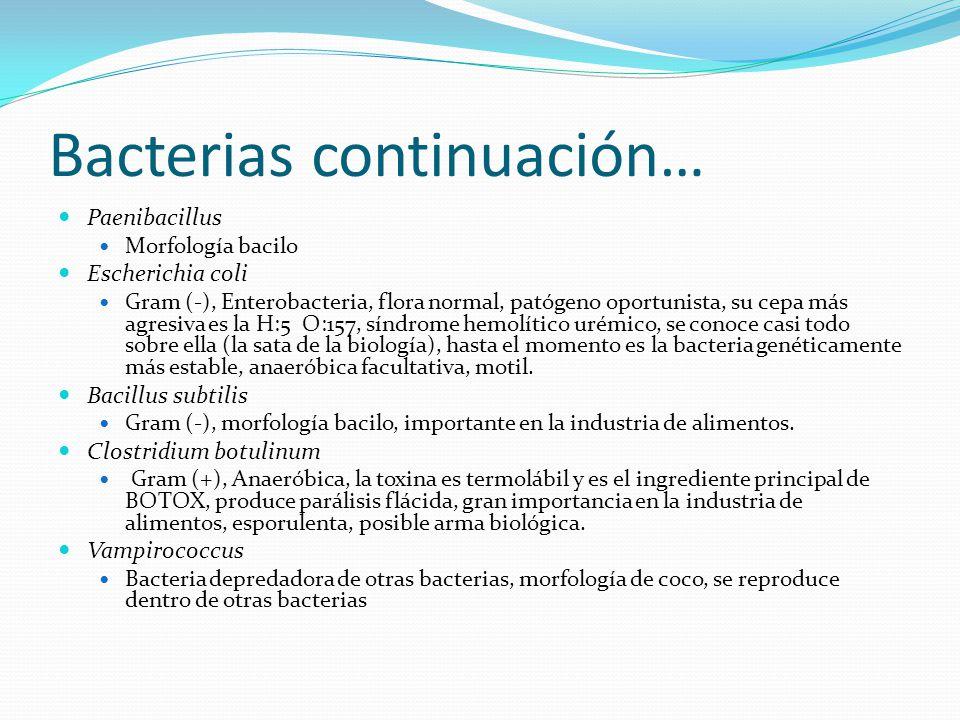 Bacterias continuación…