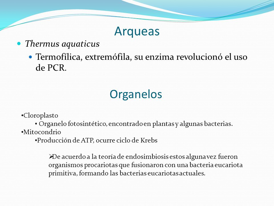 Arqueas Organelos Thermus aquaticus