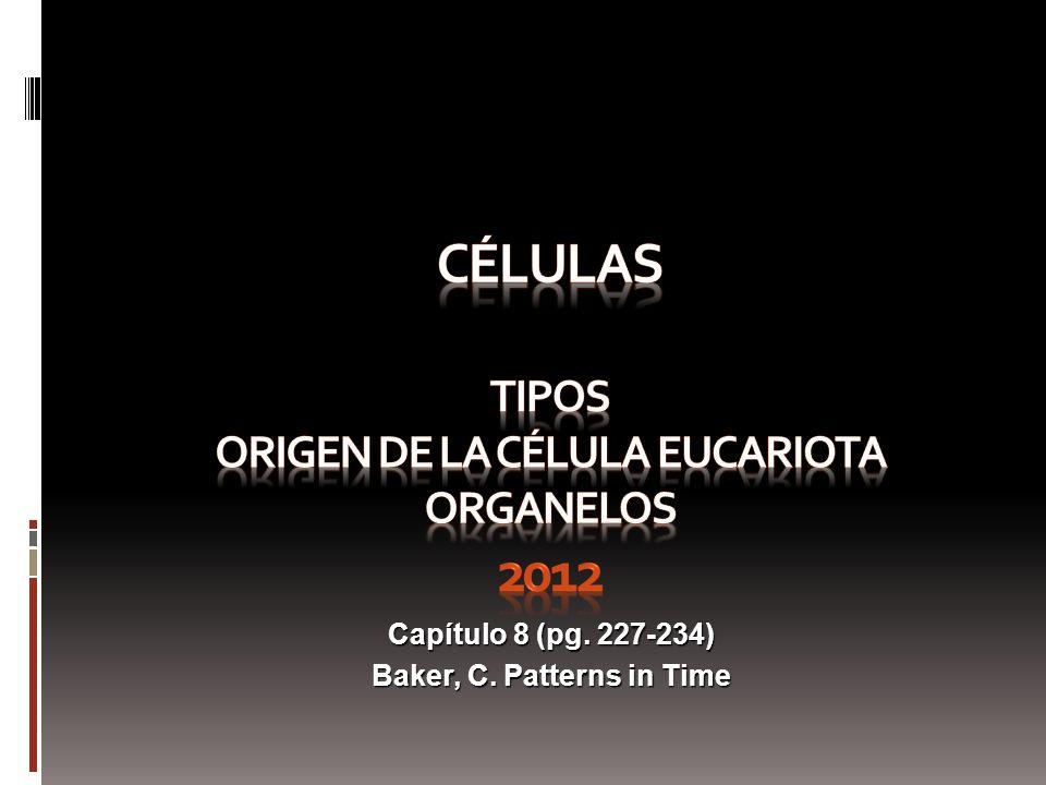 CÉLULAS TIPOS Origen de la célula eucariota ORGANELOS 2012