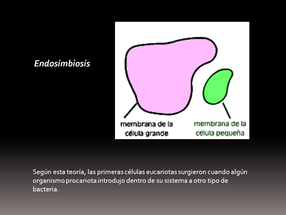 Endosimbiosis Thermoplasma.