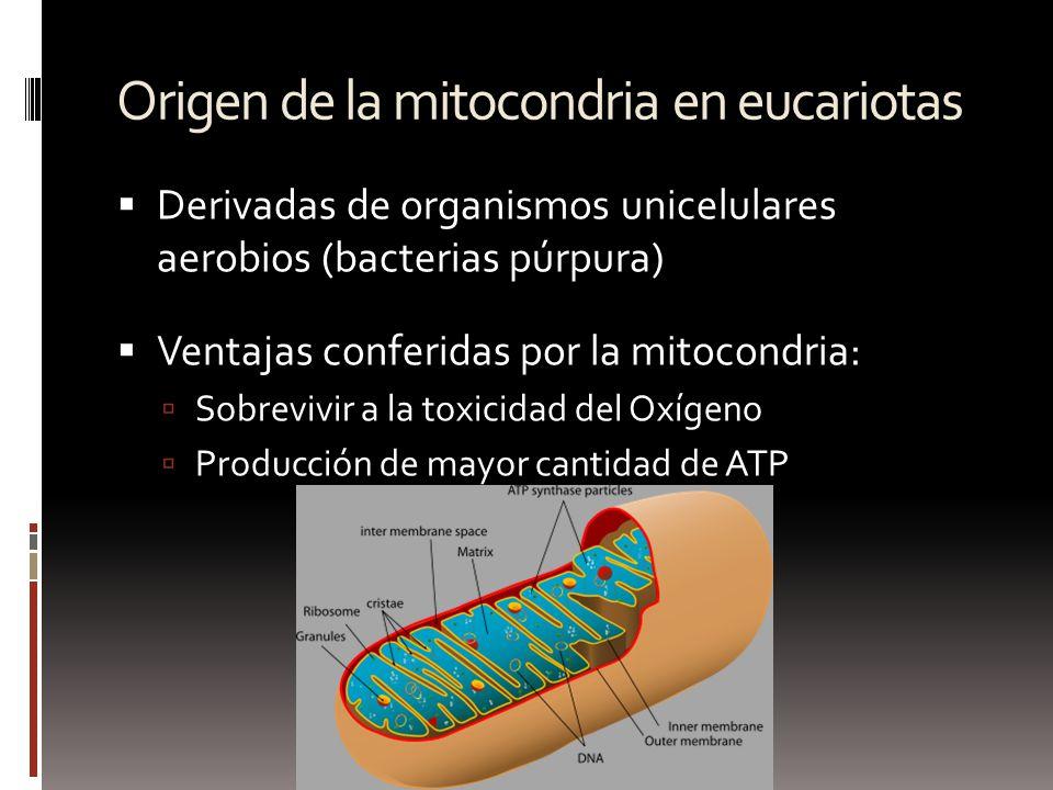 Origen de la mitocondria en eucariotas