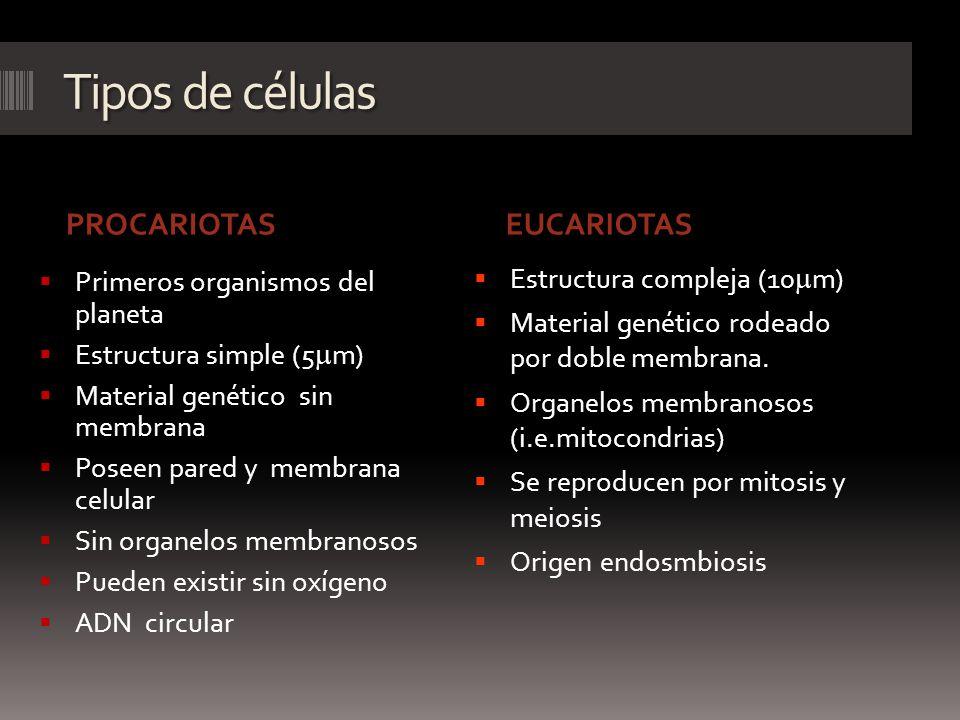 Tipos de células PROCARIOTAS EUCARIOTAS Estructura compleja (10mm)
