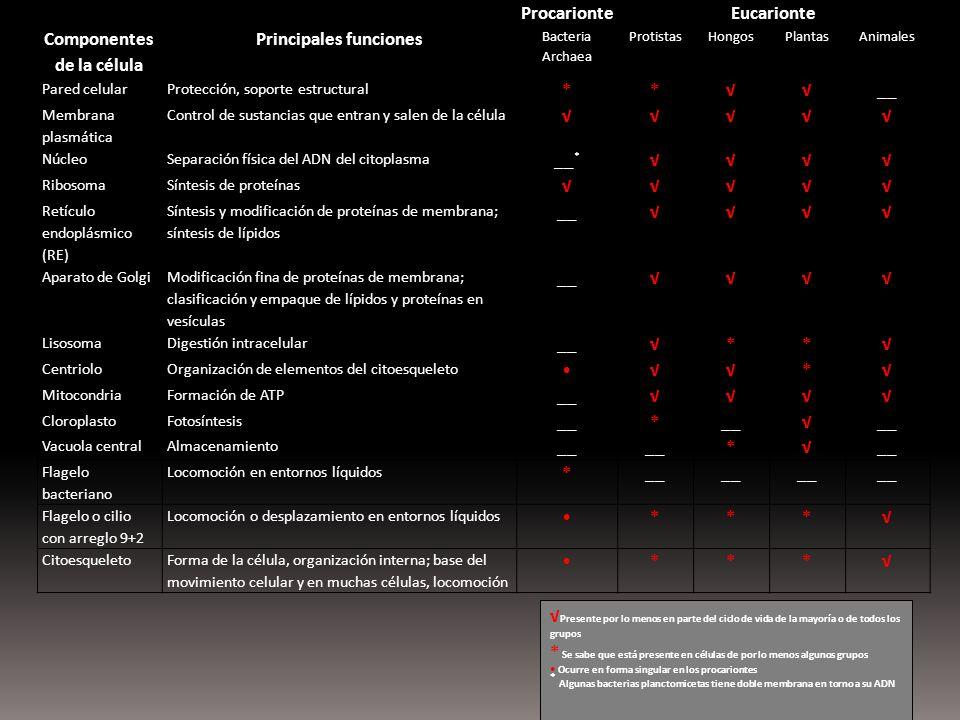Componentes de la célula Principales funciones