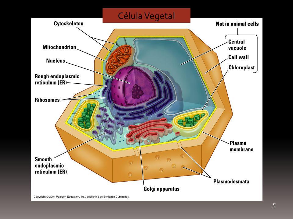 Célula Vegetal 5