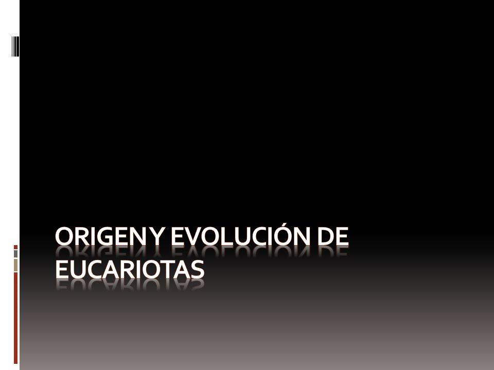 Origen y evolución de eucariotas
