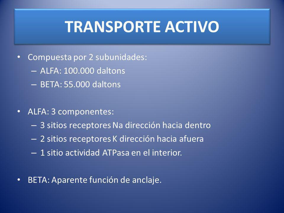 TRANSPORTE ACTIVO Compuesta por 2 subunidades: ALFA: 100.000 daltons