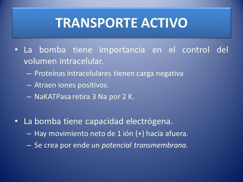 TRANSPORTE ACTIVO La bomba tiene importancia en el control del volumen intracelular. Proteínas intracelulares tienen carga negativa.
