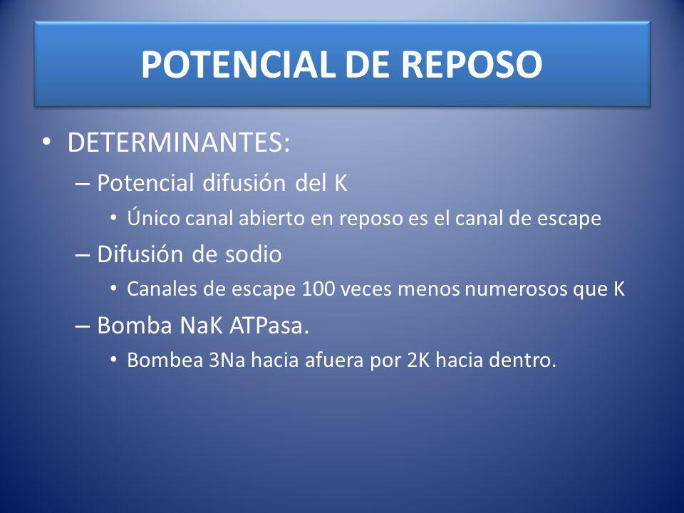POTENCIAL DE REPOSO DETERMINANTES: Potencial difusión del K