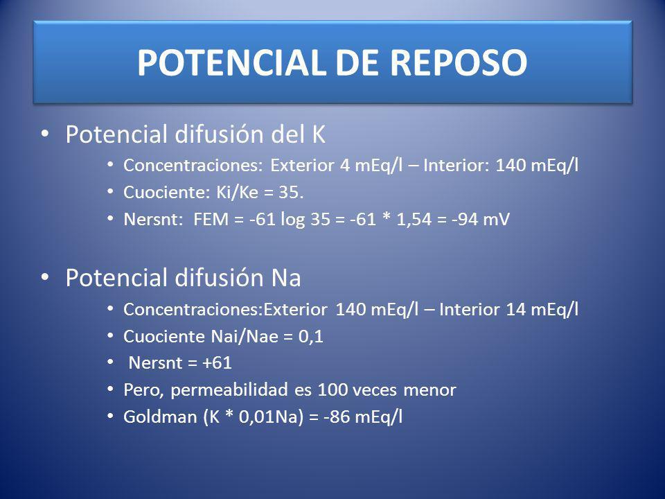 POTENCIAL DE REPOSO Potencial difusión del K Potencial difusión Na