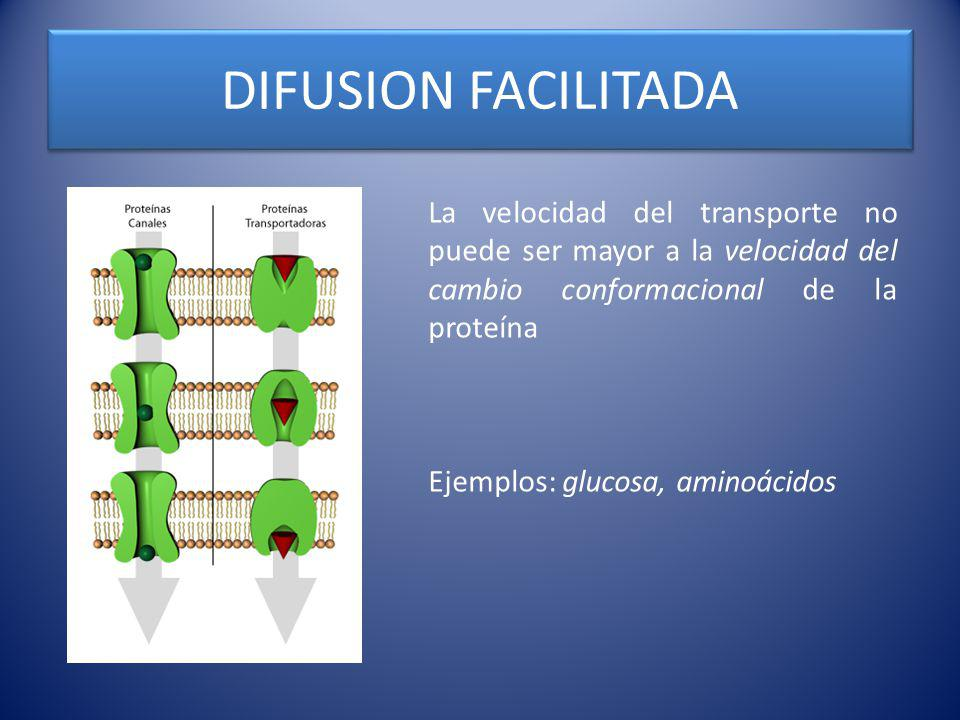 DIFUSION FACILITADA La velocidad del transporte no puede ser mayor a la velocidad del cambio conformacional de la proteína.