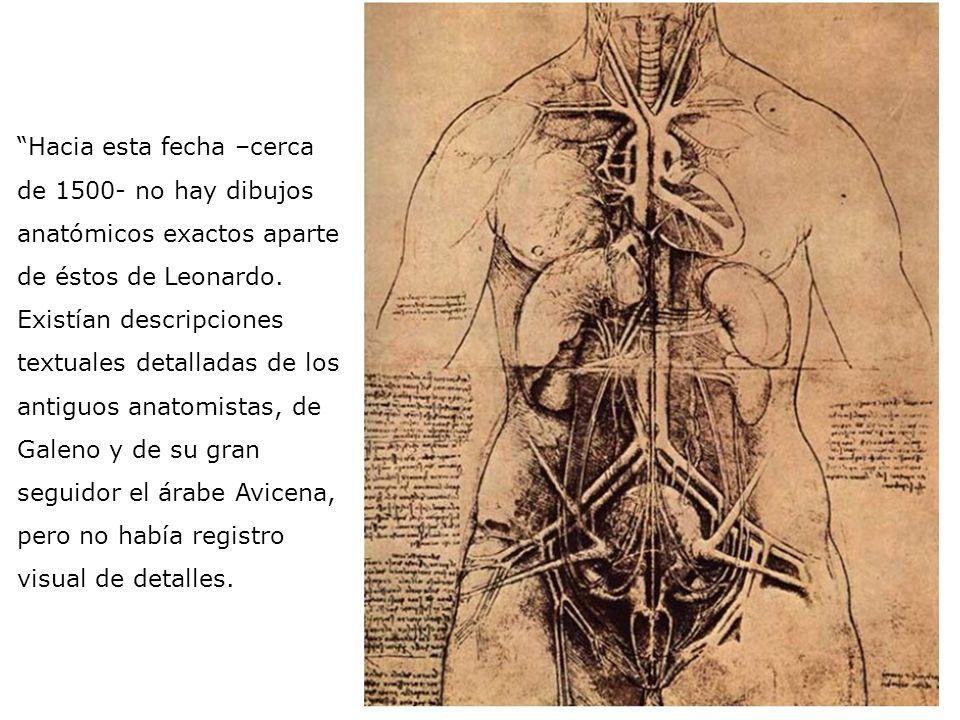 Hacia esta fecha –cerca de 1500- no hay dibujos anatómicos exactos aparte de éstos de Leonardo. Existían descripciones textuales detalladas de los antiguos anatomistas, de Galeno y de su gran seguidor el árabe Avicena, pero no había registro visual de detalles.