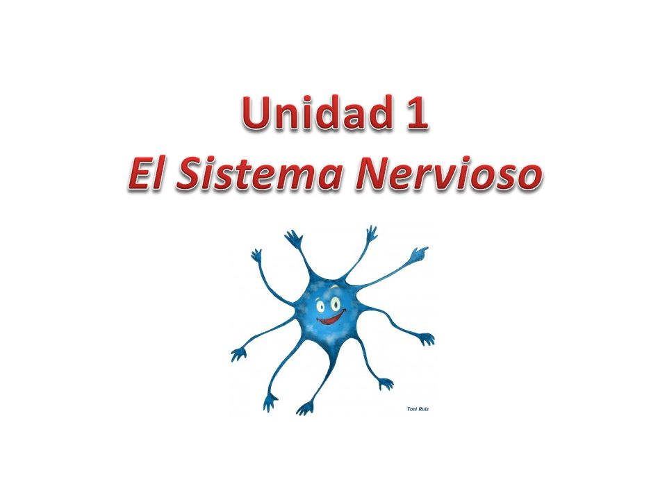 Unidad 1 El Sistema Nervioso